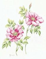 2007 Wild Roses Fine-Art Print