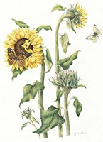October Sunflower Fine-Art Print