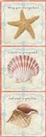 Sea Shells  -  D Fine-Art Print