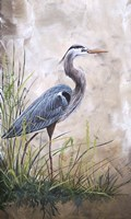 In The Reeds - Blue Heron - A Fine-Art Print