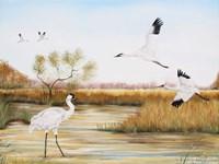 Whooping Cranes - A Fine-Art Print