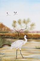 Whooping Cranes - B Fine-Art Print