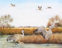Sandhill Cranes - A Fine-Art Print