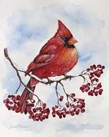 Cardinal And Winter Berries - A Fine-Art Print