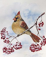 Cardinal And Winter Berries - B Fine-Art Print