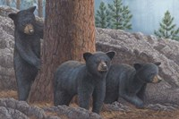 Black Bear Cub Trio Fine-Art Print