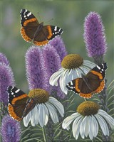Red Admirals Fine-Art Print
