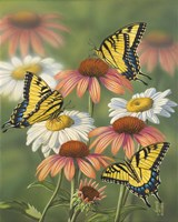 Yellow Tiger Swallowtails Fine-Art Print
