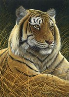 Sumatran Tiger Fine-Art Print