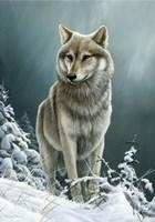 Wolf On The Ridge Fine-Art Print