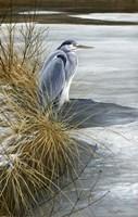 Winter Heron Fine-Art Print