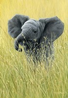 Elephant In The Grass Fine-Art Print