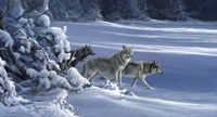 The Strength Of The Wolf Is The Pack Fine-Art Print