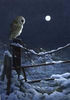Silent Night Barn Owl Fine-Art Print