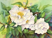 Camellias Fine-Art Print
