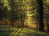 Autumn Light Fine-Art Print