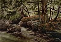 Forest Intrigue Fine-Art Print