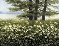 River Daiseys Fine-Art Print