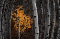 Light of the Forest Fine-Art Print