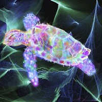 Turtle 1 Fine-Art Print