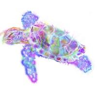 Turtle 11 Fine-Art Print