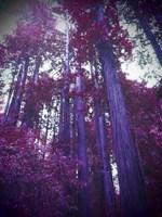 Purple Tree Fine-Art Print