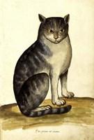 Felis Syriacus Ulisse Aldrovani (1522 -1605) Fine-Art Print