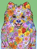Flowers Pomeranian Fine-Art Print