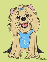 Yorkshire Terrier Showcut Fine-Art Print