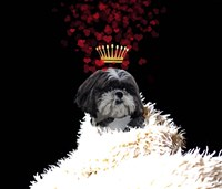 Royal Love Pup - Shi Tzu Fine-Art Print