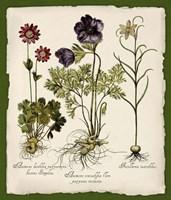 Botanica Nostalgia II Fine-Art Print