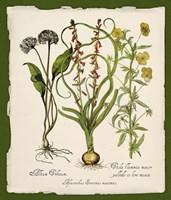 Botanica Nostalgia Fine-Art Print