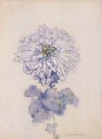 Chrysanthemum Fine-Art Print