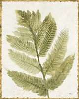 Forest Ferns I Antique Fine-Art Print
