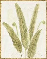 Forest Ferns II v2 Antique Fine-Art Print