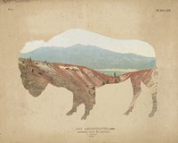 American Southwest Buffalo Distressed Fine-Art Print