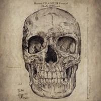 Cranium III Fine-Art Print