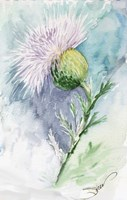 Thistle Watercolor Sketch Fine-Art Print