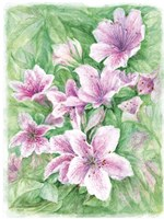 Pink Azaleas Watercolor Fine-Art Print