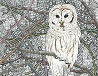Barred Owl Fine-Art Print