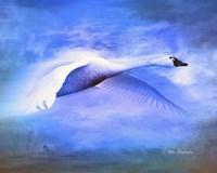 Swan Fly Fine-Art Print