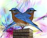 Twin Blue Bird Fine-Art Print