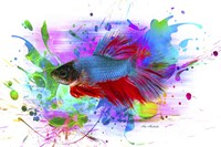 Fish and colors Fine-Art Print