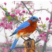 Spring Bird 6NV Fine-Art Print