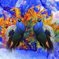 Bird Collection 26 Fine-Art Print
