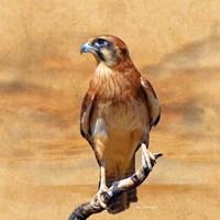 Bird Collection 27 Fine-Art Print