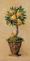 Potted Pears Framed Print