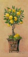 Potted Lemons Fine-Art Print