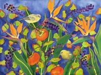 Amakihi Delight Fine-Art Print