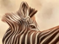 Zebra Looking Over Shoulder Fine-Art Print
